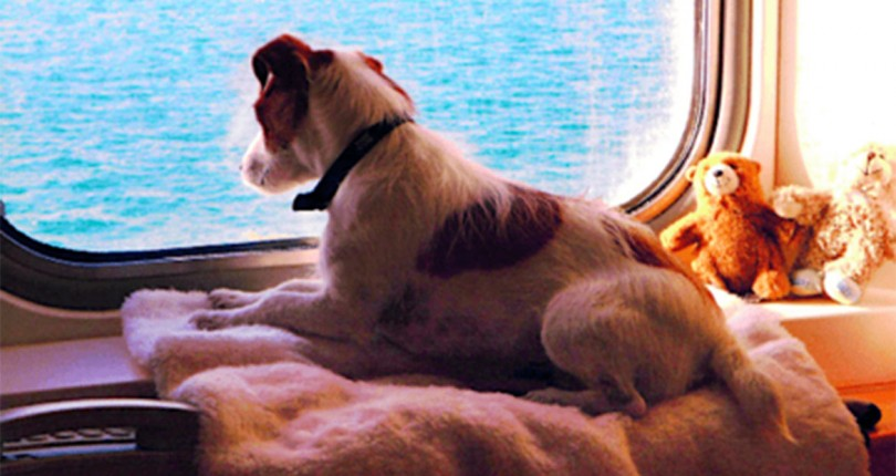 Tips for taking your dog abroad