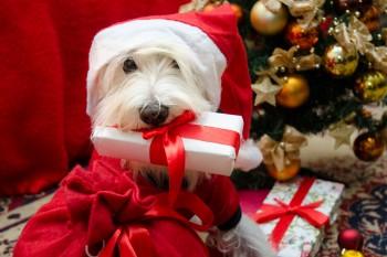 Santa Paws Tiem Nearly...